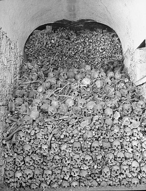 Rats crawling around on the skulls and bones.