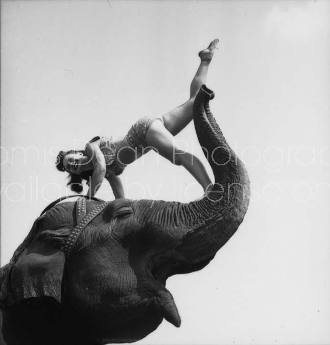 RINGLING CIRCUS ELEPHANT AND SHOWGIRL