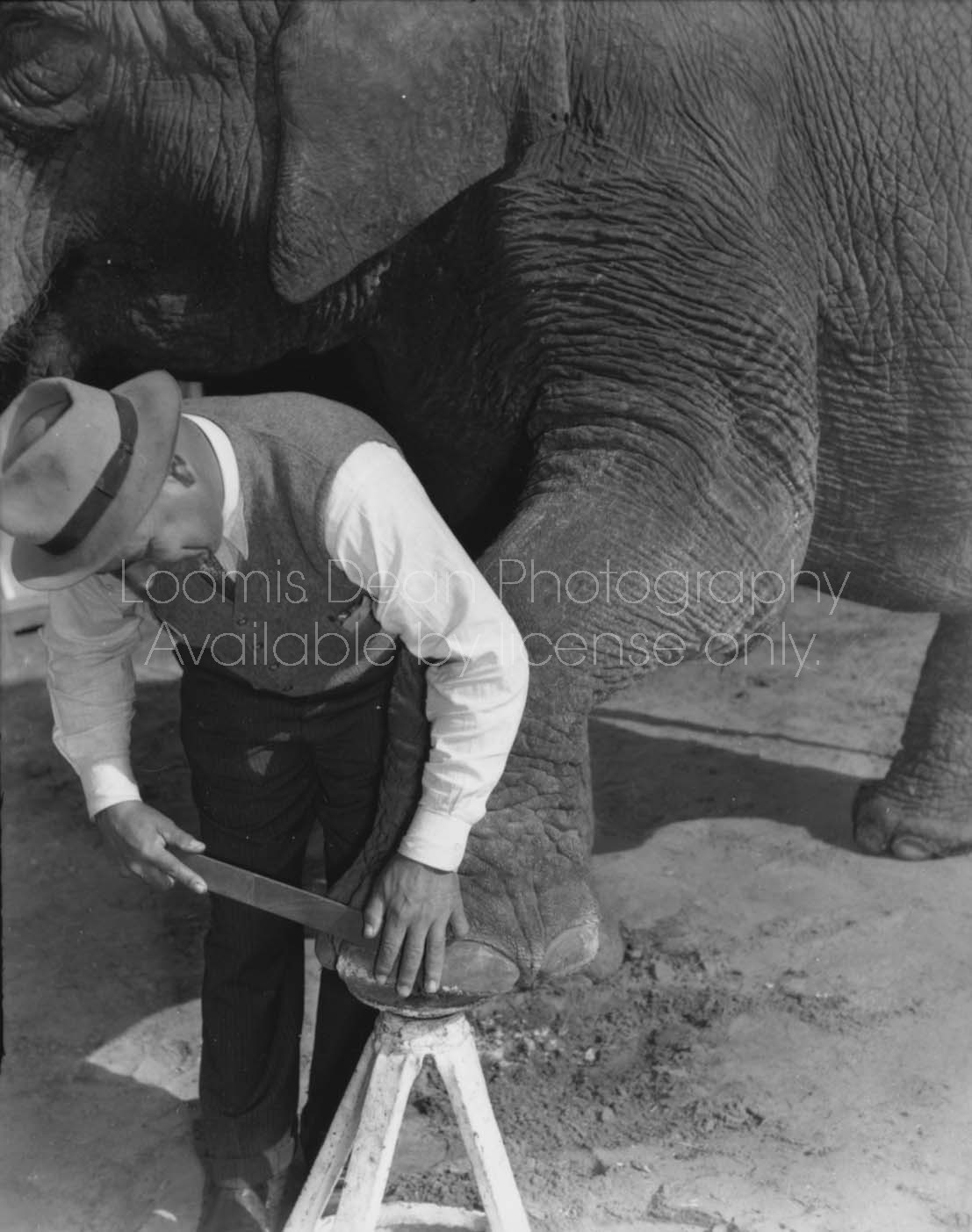 RINGLING CIRCUS ELEPHANT PEDICURE