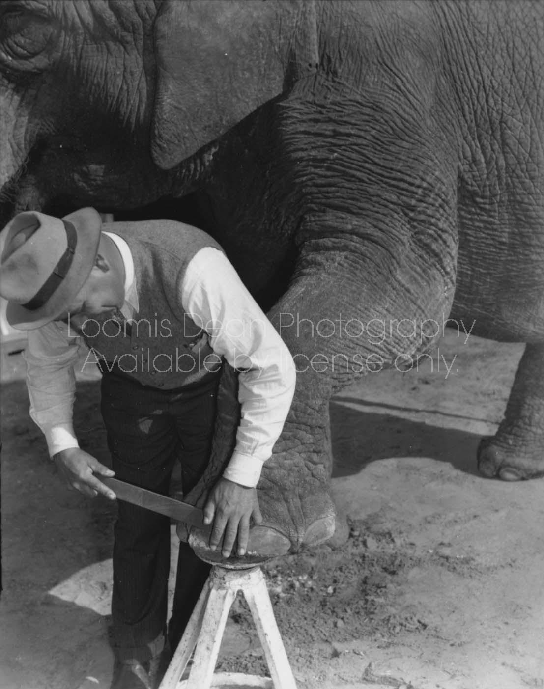RINGLING CIRCUS ELEPHANT PEDICURE