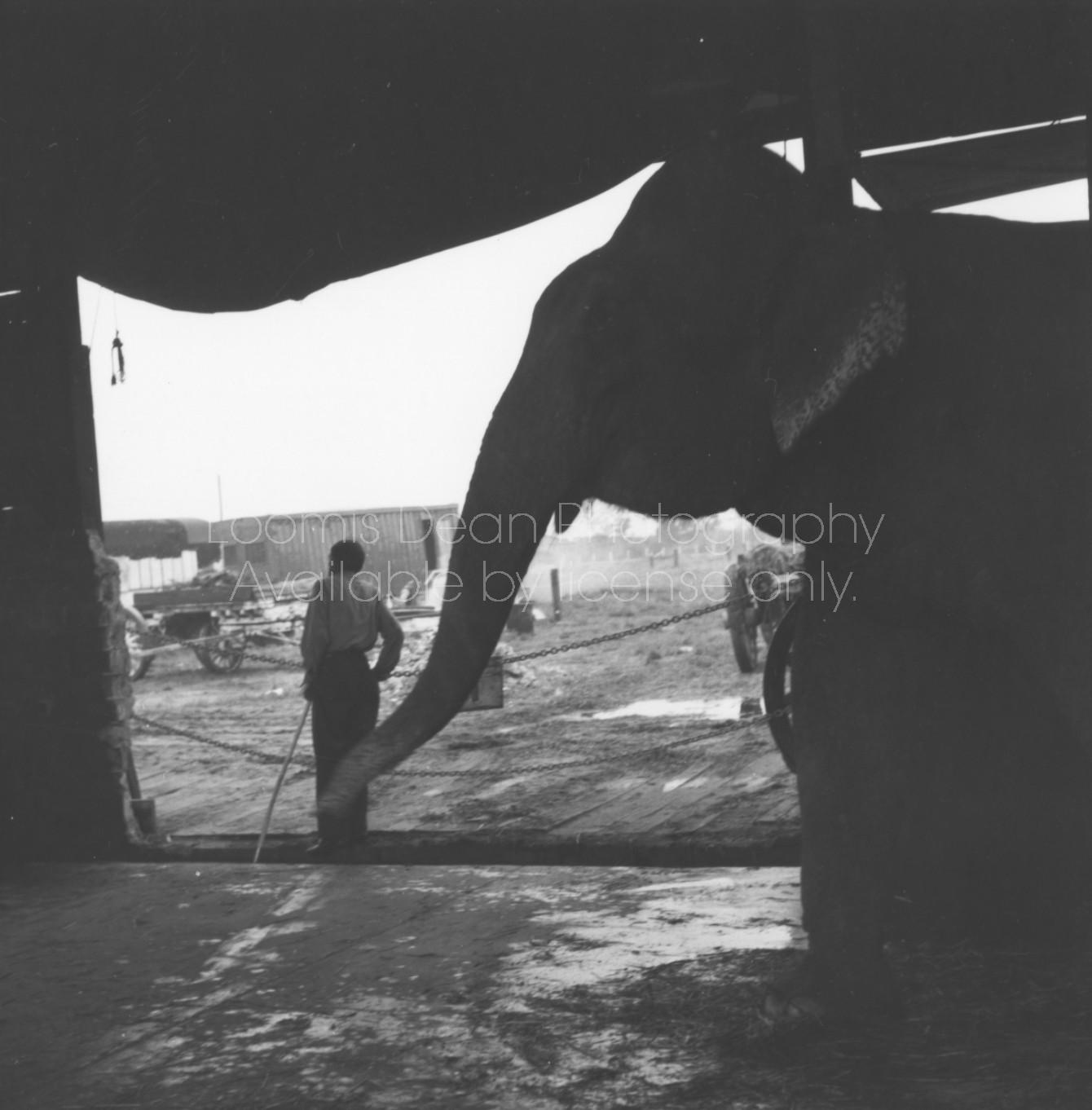 RINGLING CIRCUS ELEPHANTS 130
