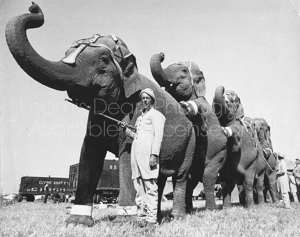 RINGLING CIRCUSELEPHANTS AND TRAINER