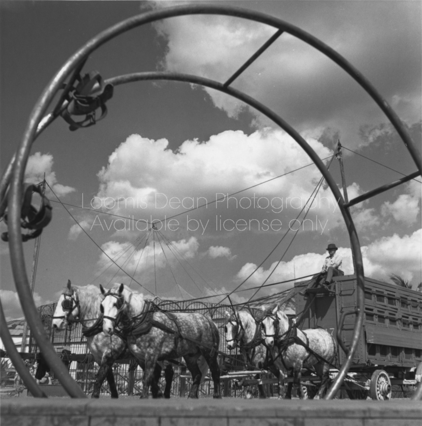RINGLING CIRCUS HORSES & CARRIAGE 101