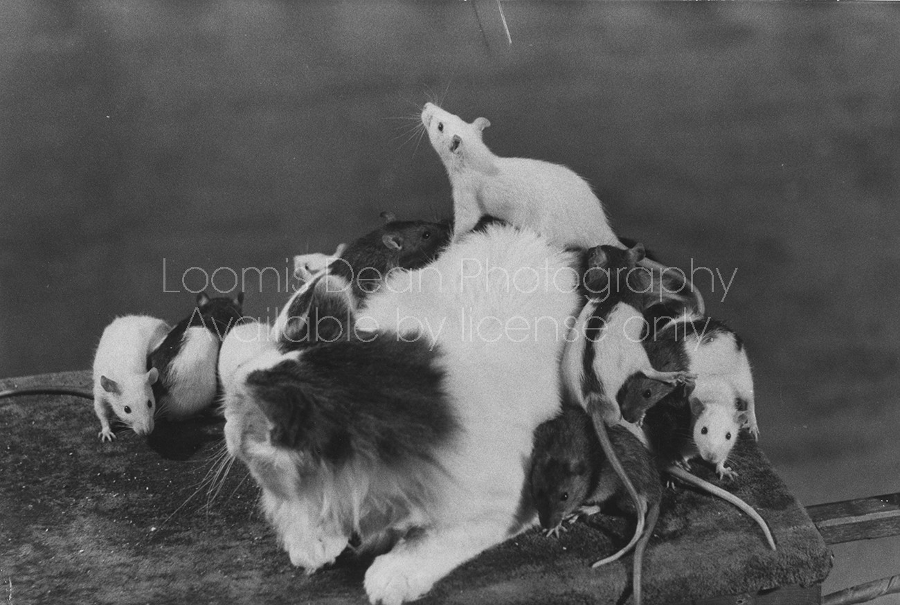 CAT AND MICE MOSCOW CIRCUS