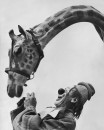 Ringling Brothers clown Lou Jacobs with giraffe.