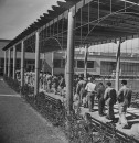 Workers at a factory lining up for lunch.
