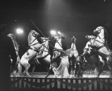 Circus Horses performing during circus at Madison Sq. Garden.
