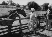 Actress Margaret Rutherford and husband Stringer Davis petting some horses.