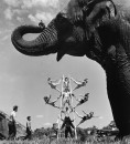 Members of the Ringling Bros. and Barnum & Bailey Circus: Ruth the elephant (fore) and the Karrel acrobatic troupe. Please Note: Pic ran flopped in LIFE 4/8/46 p.118.
