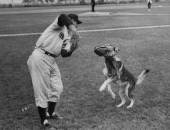 BASEBALL DOG 457