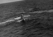 WWII U.S. AIR FORCE DITCHED B29 IN THE PACIFIC OCEAN 095
