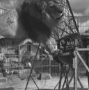 RINGLING CIRCUS LIONS 068