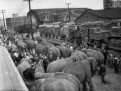 RINGLING CIRCUS ELEPHANTS LOADING 2