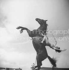 A circus equestrian performing her act during the show.