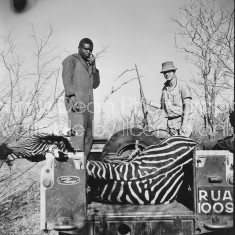 GAME WARDEN AND ZEBRA 1963 440