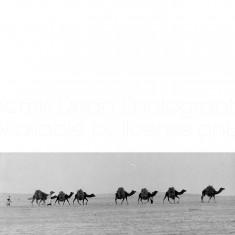 CAMELS IN SAHARA DESERT S 461
